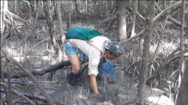 """Lội rừng ngập mặn ở Đất Mũi """"săn"""" loài cá kỳ lạ nhất hành tinh"""