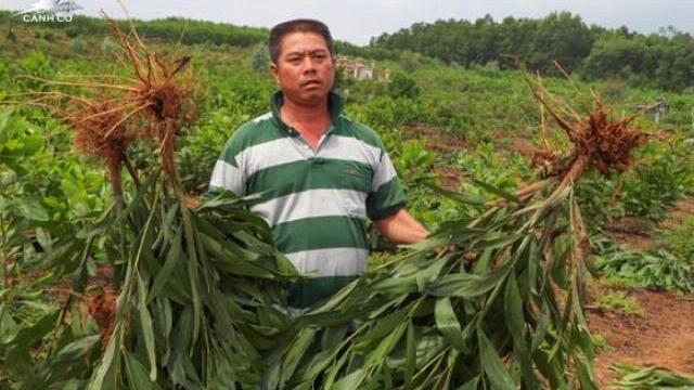 Nhổ hơn 3.000 m2 cây trồng của dân, chính quyền xã nói do nhầm tên